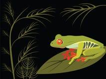 вал красного цвета лягушки глаза Стоковая Фотография