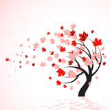 вал красного цвета осени Стоковое Фото