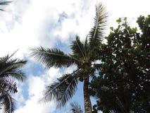 вал Кубы guillermo кокоса cayo стоковая фотография