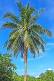 вал Кубы guillermo кокоса cayo Стоковые Фото