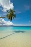 вал ладони кокоса пляжа совершенный тропический Стоковая Фотография