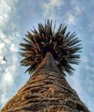 вал ладони острова Корсики среднеземноморской принятый съемкой Стоковые Фото