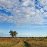 вал ландшафта поля Стоковые Фото