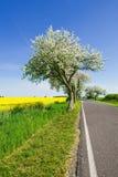 вал ландшафта цветения яблока Стоковое Фото