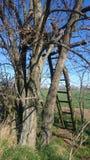 вал лета сезона поля сельской местности Стоковое Фото