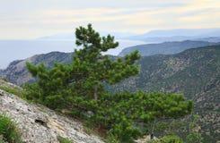 вал лета сосенки горы холма Крыма Стоковая Фотография
