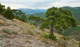 вал лета сосенки горы холма Стоковая Фотография
