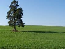 вал лета Стоковая Фотография RF