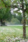 вал лета hailstorm рака яблока Стоковое Фото