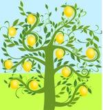 вал лимона Стоковое Изображение RF