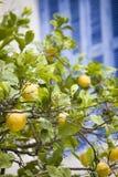 вал лимона Стоковое фото RF