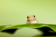 вал листьев лягушки младенца Стоковые Изображения RF