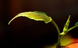 вал листьев новый Стоковое фото RF