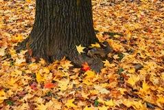 вал листьев осени Стоковые Фотографии RF