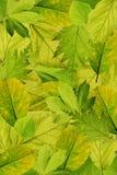 вал листьев предпосылки свежий стоковые изображения rf
