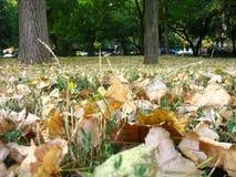 вал листьев Стоковые Изображения RF