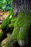 вал листьев Стоковое Фото