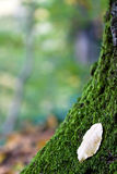 вал листьев Стоковые Фото