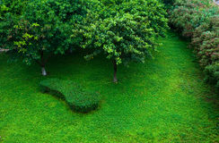 вал лужайки Стоковая Фотография