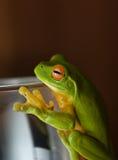 вал лягушки стеклянный зеленый Стоковая Фотография