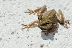 вал лягушки Стоковые Изображения
