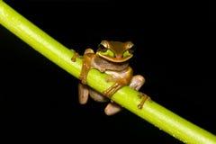 вал лягушки Стоковые Фотографии RF