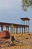 Вал мангровы отрезока Стоковое Изображение