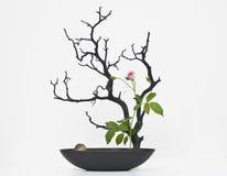 вал мертвого цветка розовый Стоковая Фотография