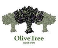 вал места молярной ночи el madrid прованский Дополнительный виргинский символ оливкового масла Стоковые Фото