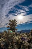 вал национального парка joshua Стоковое фото RF