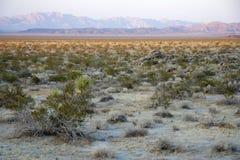 вал национального парка joshua Стоковое Изображение RF