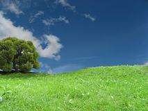 вал неба травы Стоковые Фотографии RF
