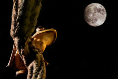 вал ночи луны света лягушки лодкамиамфибии Стоковое Изображение