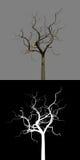 вал облыселой ветви мертвый изолированный бесплатная иллюстрация