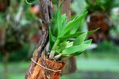 вал орхидеи Стоковые Изображения