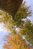вал осени высокий Стоковое Изображение
