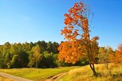 Вал осени в сельской местности Стоковые Изображения RF
