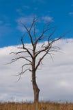 вал осени мертвый Стоковое Фото