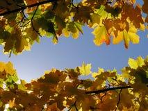 вал осени Стоковое Фото