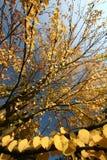 вал осени Стоковое Изображение