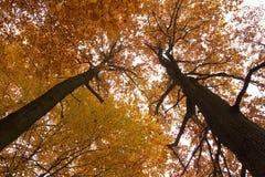 вал осени Стоковая Фотография RF
