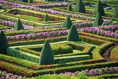 вал парка bushes Стоковая Фотография