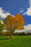 вал покрашенного поля осени Стоковое Изображение RF