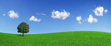 вал поля зеленый сиротливый Стоковое фото RF