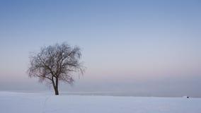вал поля одиночный снежный стоковое фото rf