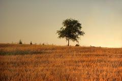 вал поля Стоковая Фотография RF