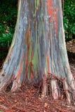 вал радуги Гавайских островов евкалипта стоковые изображения