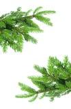 вал рамки ели ветви Стоковое Изображение