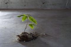 Вал растет от бетона стоковые фотографии rf
