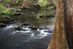 вал реки hillsborough кипариса стоковое фото rf